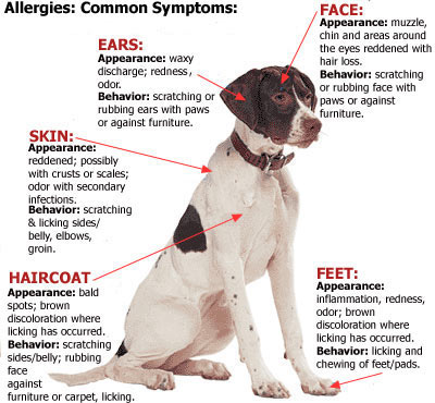 Contact Dermatitis Dogs